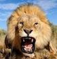 up-roar